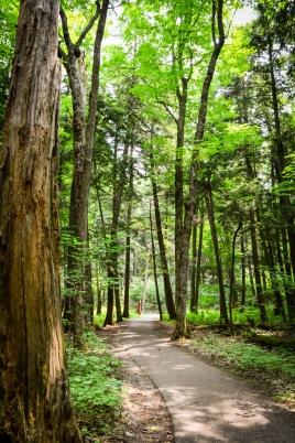 Hartwick Pines-3